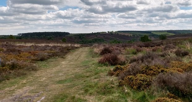 £7.8m Cannock Chase conservation plan backed